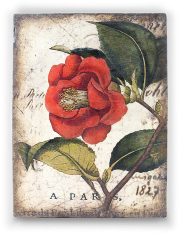 T404 Red Camellia