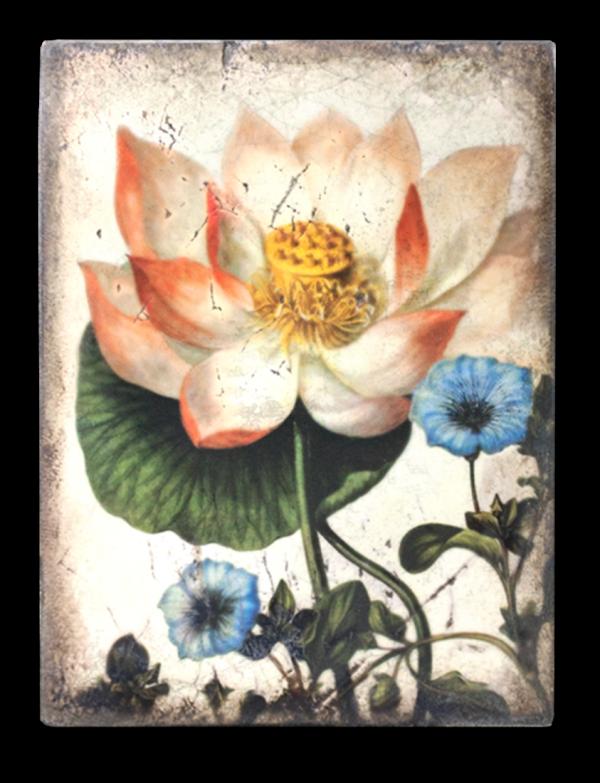 T407 Sacred Lotus